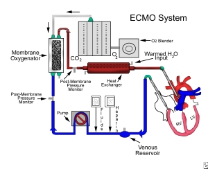 What is extracorporeal membrane oxygenation (ECMO)?  ECMO is a special procedure that uses an artificial heart-lung machine to take over the work of the lungs (and sometimes also the heart). ECMO is used most often in newborns and young children, but it also can be used as a last resort for adults whose heart or lungs are failing.