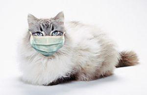 cat_swine_flu_1104