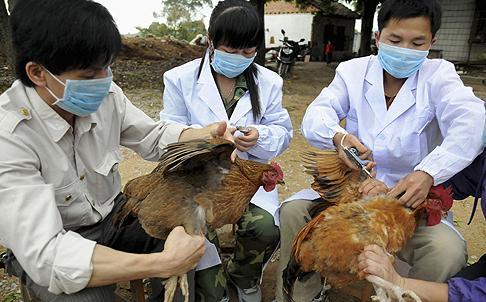 Bird inspectors in Shanghai