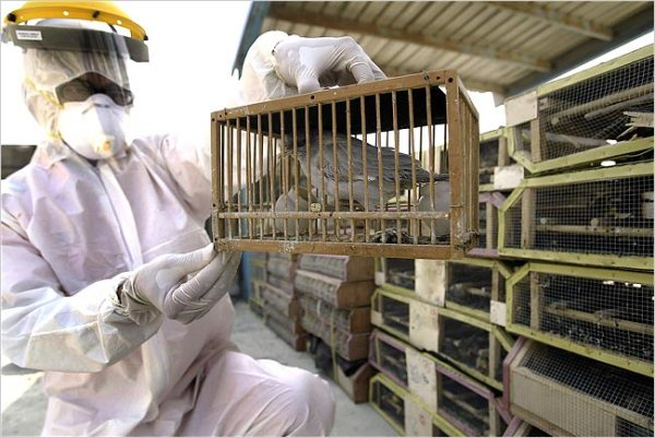 Today China reported that the H7N9 bird flu virus has seriously sickened four more people in one province. The disease has already caused two deaths in other provinces.