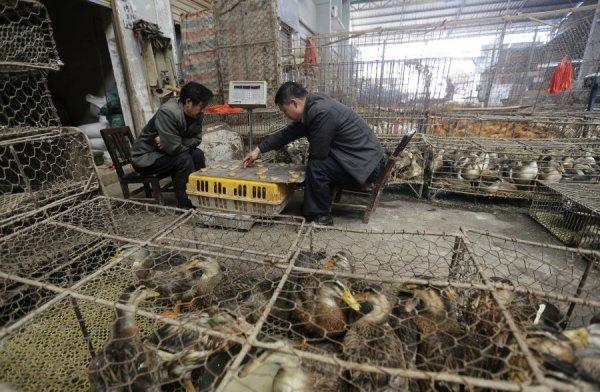 Poultry market in Wuhan, Hubei province.
